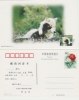 Chine. Carte Postale. Loup. Wolf. - Chiens