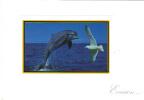 Lot N° 130 De 23 Cartes Postales / Photos Série EVASION + 2 Gratuites - Postcards
