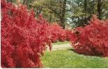 Carte Postale, Delaware, Wintertyhur Gardens Henry Francis Du Pont - Non Classés