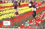 Télécarte Japon FLEUR * TULIPE (135) TULIP * TULP * TULPE * Flower * Phonecard Japan * TELEFONKARTE  BLUMEN - Bloemen