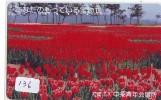 Télécarte Japon FLEUR * TULIPE (136) TULIP * TULP * TULPE * Flower * Phonecard Japan * TELEFONKARTE  BLUMEN - Bloemen