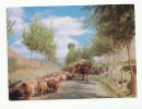 Afghanistan. Troupeau De Moutons. A Village Scene - Afghanistan