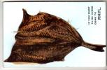 Flintshire  -Rhyl - Kipper Pullout Postcard - Flintshire