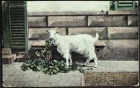 """""""Goat"""",  Postally Used In 1908.   """"Ringmer"""" (Sussex) Thimble Pmk - Unclassified"""