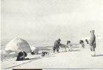 PK   Eskimo 's Met Iglo En Honden - Postkaarten