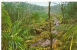 Carte Postale, Hawaï, Fern Forest, Forêt Tropicale, Jungle - Zonder Classificatie