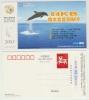 Chine. China. Dauphin. Carte Postale. - Delfine