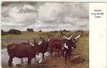 REF LPU10 / 1 - KENYA UGANDA TANGANIKA CP POUR MADAGASCAR ANNEES 1950 THEME BOEUFS FAUNE - Kenya (1963-...)