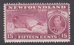Newfoundland 1937 Die I Add. Coronation 15c  SG 263   MNH - 1908-1947