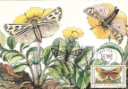 PAPILLONS, BUTTERFLY - CM,maxicard,cartes Maximum 1990 Romania. - Vlinders