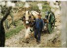 Peu Commun CHEVAL POILS LAINEUX ! Photo Jacques BERNARD Attelage GESTES PAYSAGES Paysan Agriculture CPM 1970s YVON CPAGR - Attelages