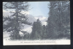 Aletschwald Und Durchblick Auf Aletschgletscher - Switzerland