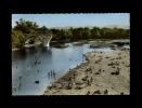 30 - PONT-SAINT-ESPRIT - Environs De - Le Vieux Pont Sur L´Ardèche - La Plage - 1157 - Pont-Saint-Esprit