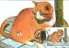 C.O.B. 2521/24 : Carnet Nature. Les Chats Européens - 1991-2000