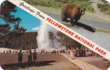 Old Faithful Geyser And Brown Bear, Greetings From Yellowstone National Park,  Wyoming, 40-60s - Yellowstone