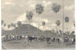 MONTE GUARANI PARAGUAY VACAS GANADO BOVINO PHOTO 1939 - Paraguay