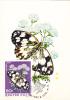 Butterflies,Papillons 1974 CM,maxicard,cartes Maximum Hungary. - Butterflies
