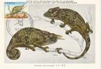 BELGIË- MAXIMAKAARTEN- DE GRIJZE KAMELEON (ZELDZAAM) - Reptiles & Batraciens
