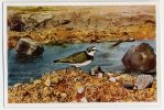 Aus Deutschlands Vogelwelt (1932) - 43 - Flußregenpfeifer, Kleine Plevier, Little Ringed Plover, Pluvier Petit-gravelot - Cigarettes