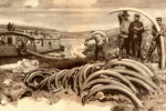 [Y44-57  ]   Mammuthus  Mammoth   Fossil  , Postal Stationery -- Articles Postaux -- Postsache F - Zonder Classificatie