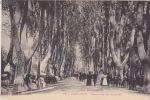 CPA De PERPIGNAN (66) - Promenade Des Platanes - Belle Animation - Perpignan