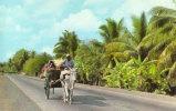 To Market Philippine Style Bull And Cart - Filippijnen