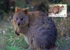 Australia 2011 World Wildlife Fund 60c Quokka Maximum Card - Maximumkarten (MC)
