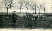 94-BONNEUIL-sur-MARNE...LE LABOUR.....CPA ANIMEE - Bonneuil Sur Marne
