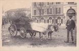 18338 Pau Attelage Béarnais. 16 Marcel  Delboy . Devant : Café Du Cirque, Théatre Du Cirque Charriot