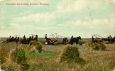 CULTURES - Canadian Harvesting Scenes - Reaping - Horses - Travel In 1908 - The Valentine & Sons Pub Co - J.v. - - Cultures