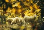 """Moutons     """"animaux"""" - Non Classés"""