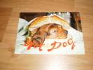 Hund Dog Dachshund Dackel Teckel Postkarte Germany - Dogs