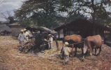 AMERIQUE CENTRALE,EL SALVADOR,prés Guatemala Et Honduras,ferme,métier,manera Original De Molienda De Azucar,sugar - Salvador