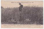 18519 Effets Du Sulfate D'Ammoniaque Sur Blé. Sans Avec. 13 Quintauyx. CFA 7.081 ( Sans Chez M.A. Chevalier à ORNEX) - Cultures