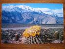 Springtime Contrast In The Desert Giant Barrel Cactus CA California 1961 Used Postcard - Zonder Classificatie
