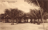 N´Dobo District Des Bangalas 1901 Aveneude Palmiers - Belgisch-Congo - Varia