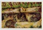 Herba - Tierwelt Der Heimat (1960) - 4 - Wildkaninchen, Konijn, Rabbit, Lapin, Oryctolagus - Chromos