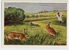 Herba - Tierwelt Der Heimat (1960) - 5 - Feldhase, Haas, Lepus, Hare, Lièvre - Chromos