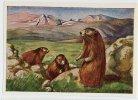 Herba - Tierwelt Der Heimat (1960) - 8 - Murmeltier, Marmota, Marmot, Marmotte - Chromos
