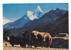 Népal. Mt Amadablam And Yak - Népal