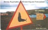 TARJETA DE TAAF ATTENTION ELEPHANT DE MER 50U TIRAGE 1500 - TAAF - French Southern And Antarctic Lands