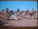 Camel Racing Saudi Arabia Postcard - Unclassified