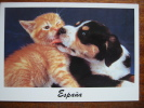 Cat And Dog Espana Spain 1993 Postcard - Unclassified
