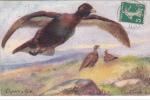 18559  Wild Fowl Capercailzie  - Grouse - 9548 TUCK OILETTE - Dessin Sileen Demm??? 1912 - Chasse