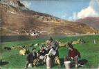 73  Les Vaches Laitiere ,Haute Vallée De L,isere ( Savoie ) - Départ  La Motte  Servolex - La Motte Servolex