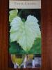 Three Choirs Vineyard Newent Gloucestershire Leaflet Brochure Flyer Handbill - Advertising