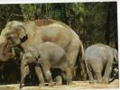 CPM       ZOO LA PALMYRE         ELEPHANTS       ELEPHANTEAUX - Elephants