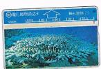 TAIWAN - CHUNGHWA TELECOM (L&G) - 1995  D5026 VITA MARINA (SEA LIFE: CORAL)    (CODE 526M)  - USED °  -  RIF. 4702 - Taiwan (Formosa)