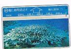 TAIWAN - CHUNGHWA TELECOM (L&G) - 1995  D5026 VITA MARINA (SEA LIFE: CORAL)    (CODE 546A)  - USED °  -  RIF. 4703 - Taiwan (Formosa)