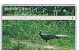 TAIWAN - CHUNGHWA TELECOM (L&G) - 1996  D6014 UCCELLI (BIRDS: SILVER PHEASANT     (CODE 644C)  - USED °  -  RIF. 4757 - Taiwan (Formosa)